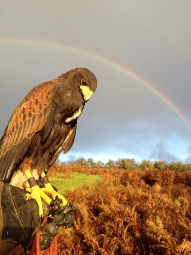 Experince Falconry at Lower Willsworthy